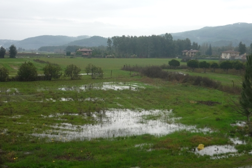 regen1.jpg