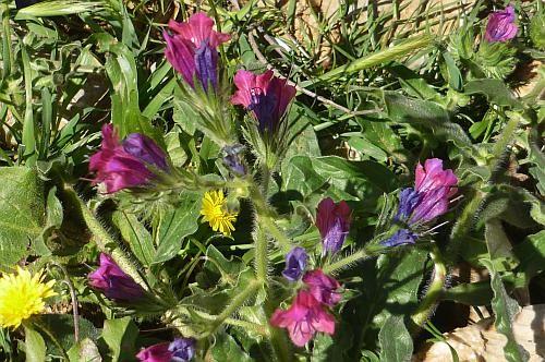 12 - Blumen