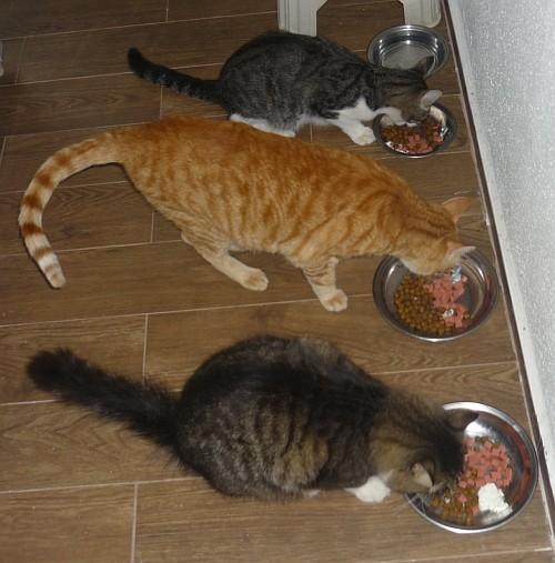 Fütterung2