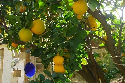 Orangen1